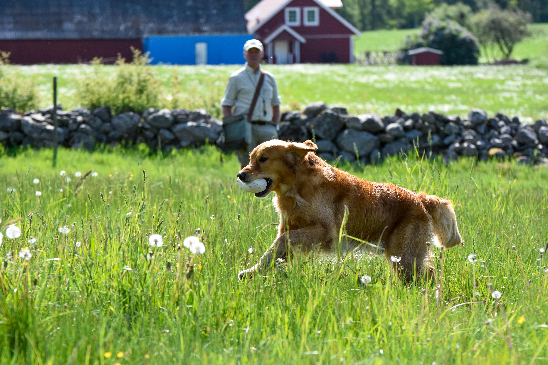 träna apporterande hund